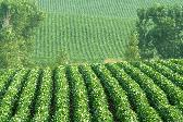 Soybeans commodity trading broker online options